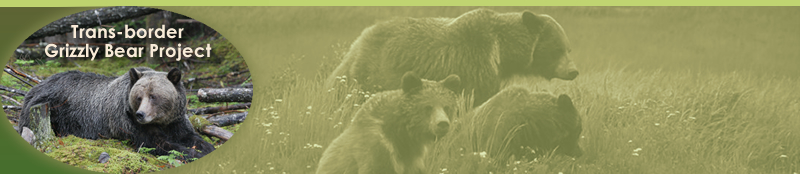 Trans-border Grizzly Bear Project